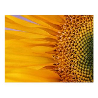 Sonnenblume-Postkarte Postkarte