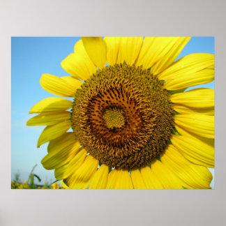 Sonnenblume-Reihe Poster