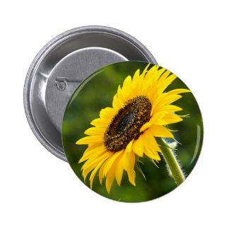 Sonnenblume Sideshot Buttons