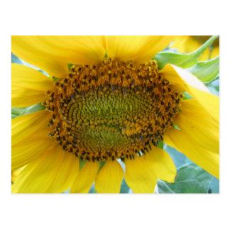 Sonnenblume-Sommer-Reihe Postkarte