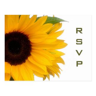 Sonnenblume UAWG Postkarte