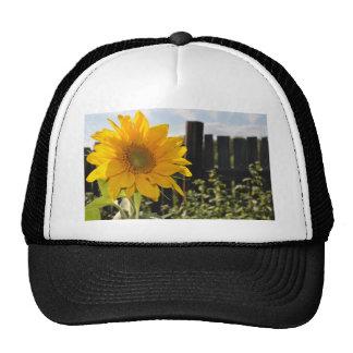 Sonnenblume und Zaun Kappe