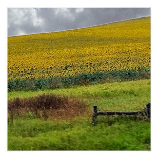 Sonnenblumebauernhof-, -Bretterzaun- u. Poster