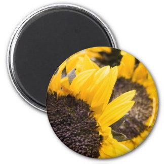 Sonnenblumehimmel Kühlschrankmagnete