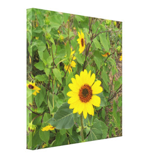 Sonnenblumen, die im Wind durchbrennen, Leinwanddruck