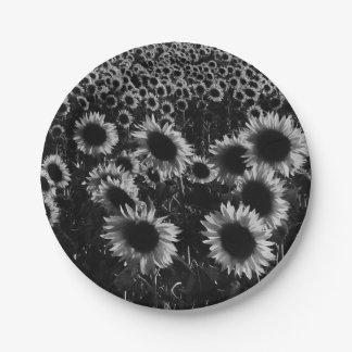 Sonnenblumen fangen in Schwarzweiss auf Pappteller