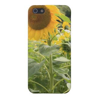 Sonnenblumen iPhone 5 Case