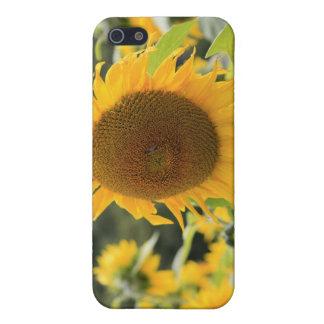 Sonnenblumen iPhone 5 Etui