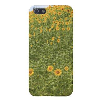 Sonnenblumen iPhone 5 Hülle
