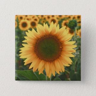 Sonnenblumen Quadratischer Button 5,1 Cm