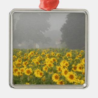 Sonnenblumen und Nebel Quadratisches Silberfarbenes Ornament
