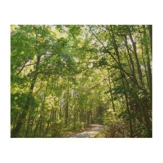 Sonnenlicht auf bewaldetem Weg am hundertjährigen Holzwanddeko