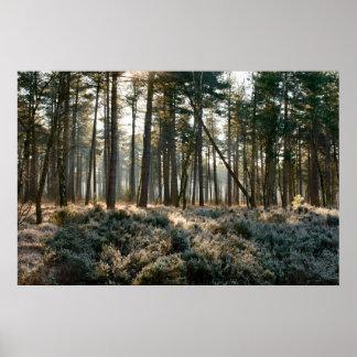 Sonnenlicht, das durch Wald mit Frost glänzt Poster