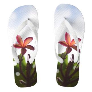 Sonnenlicht durch Plumeria-Blumenblätter dreht Flip Flops