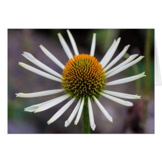 Sonnenschein-Blumen-Grußkarte Karte