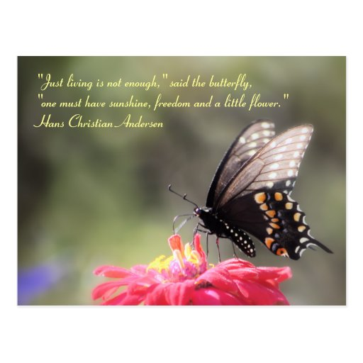 """""""Sonnenschein, Freiheit, Blumen-"""" Schmetterlings-Z Postkarte"""