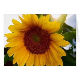 Sonnenschein-Sonnenblume Karte