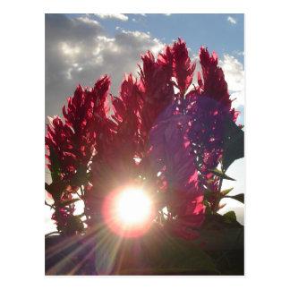 Sonnenuntergang-Flammen-Blumen Postkarte
