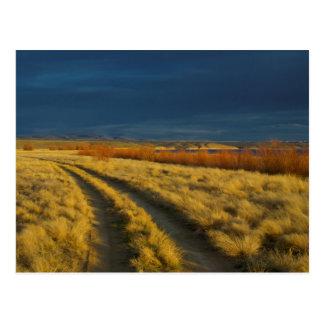 Sonnenuntergang hebt die rote Barke der Büsche Postkarte