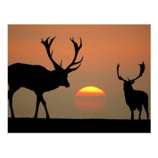Sonnenuntergang-Hirsche Postkarte
