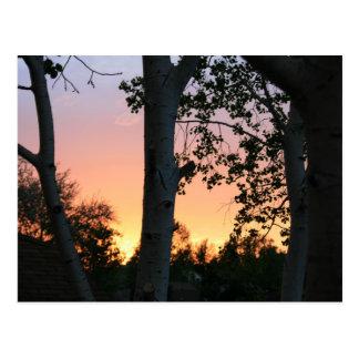 Sonnenuntergang in den Bäumen Postkarte