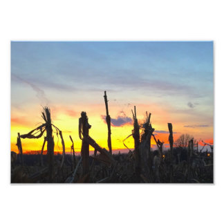 Sonnenuntergang-Mais-Feld Fotodruck