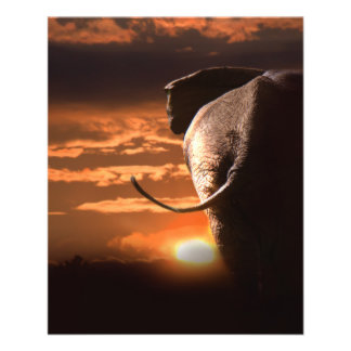 Sonnenuntergang mit Elefanten 11,4 X 14,2 Cm Flyer