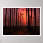 Sonnenuntergang-Nebel Plakatdruck