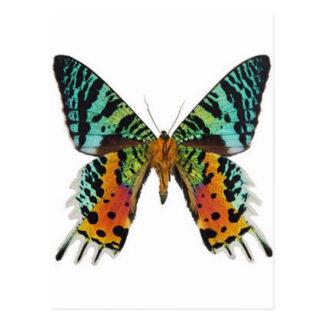 Sonnenuntergang-Schmetterling Postkarte