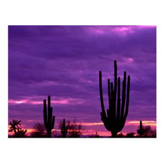 Sonnenuntergang, Scottsdale, Arizona Postkarte
