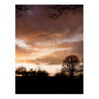 Sonnenuntergang-Silhouettebäume Postkarten