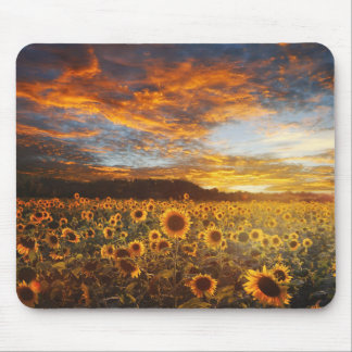 Sonnenuntergang SunflowersField Mauspad