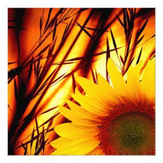 Sonnenuntergang u. Sonnenblume Fotodruck