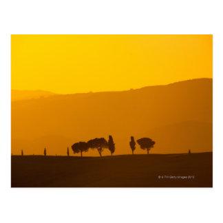Sonnenuntergang über Zypresse und Kiefern in Val Postkarte