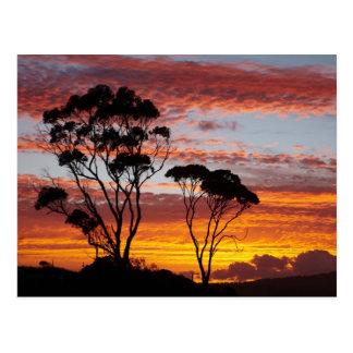 Sonnenuntergang und Gummi-Baum, Binalong Bucht, Postkarte