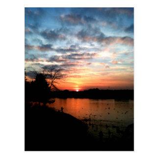 Sonnenuntergang- und Vogelfütterung des Rheins Postkarte