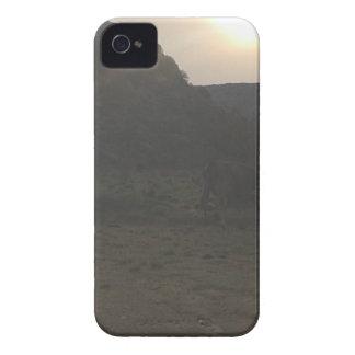 Sonnenuntergang-Vieh iPhone 4 Case-Mate Hüllen