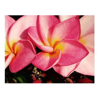 Sonnenunterganghawaiisches Plumeriafrangipani-Trio Postkarte
