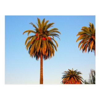 Sonnige Kalifornien-Palme-Postkarte Postkarte
