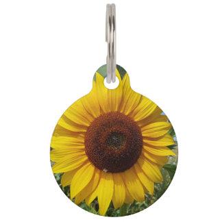 Sonnige Sonnenblume Haustiermarke