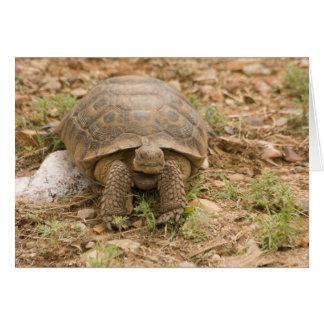 Sonoran Deset Schildkröte Karte