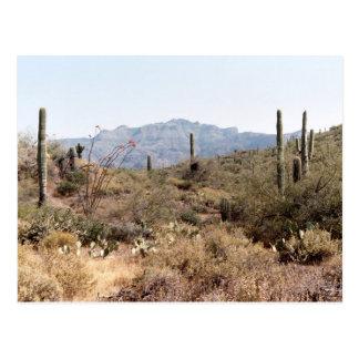 Sonoran Wüste im Frühjahr Postkarte
