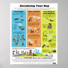 Sozialisieren Ihres Hundes Poster