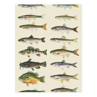 Spalten der Fische Postkarte