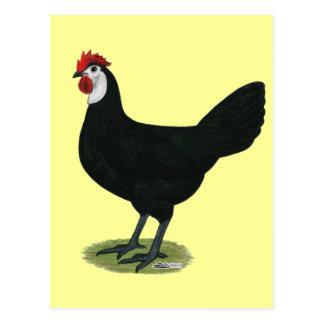 Spanisch:  Weiß-gesichtige Henne Postkarte