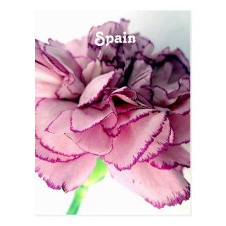 Spanische Gartennelken Postkarte