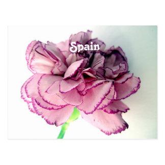 Spanische Gartennelken Postkarten