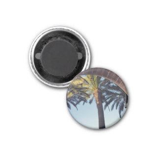 Spanische Palme Runder Magnet 3,2 Cm