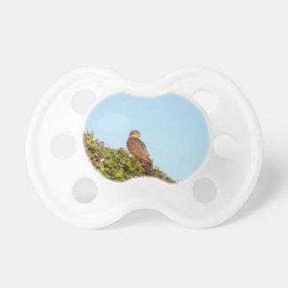 Sparrowhawk Schnuller