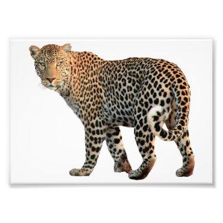 SPASS große Katzen-Fotos Fotodruck